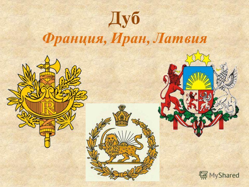Дуб Франция, Иран, Латвия
