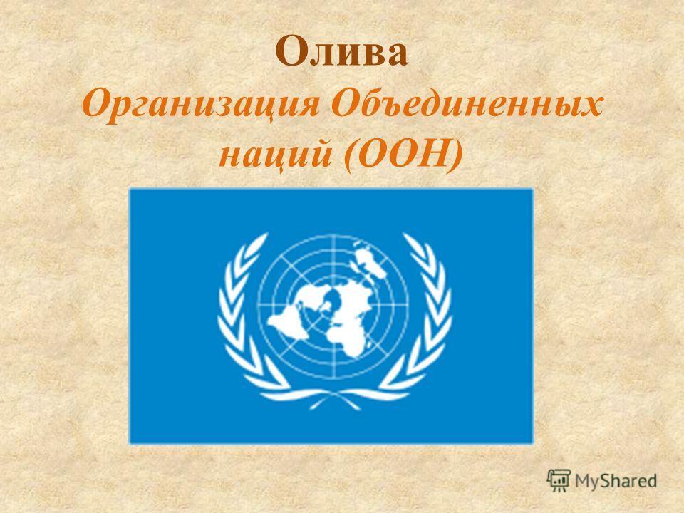 Олива Организация Объединенных наций (ООН)