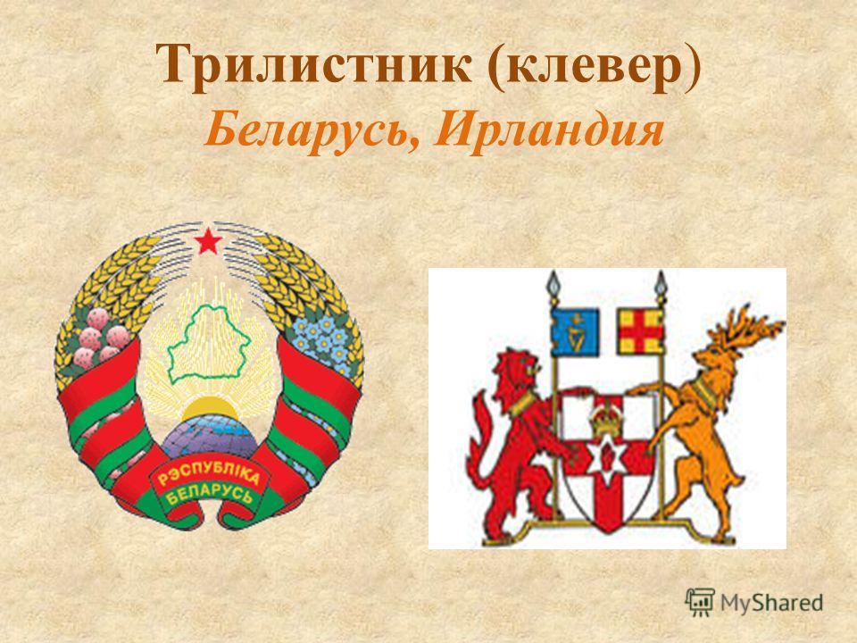 Трилистник (клевер) Беларусь, Ирландия