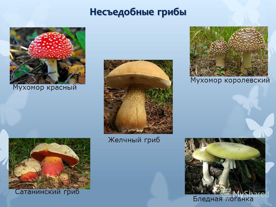 Несъедобные грибы Мухомор красный Мухомор королевский Бледная поганка Желчный гриб Сатанинский гриб