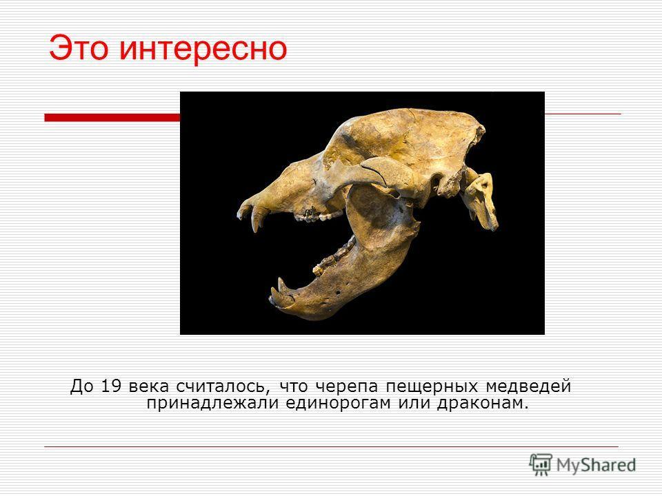 Маленькие уши, морда чем-то напоминает свиную. Так нарисовали пещерных медведей древние люди.