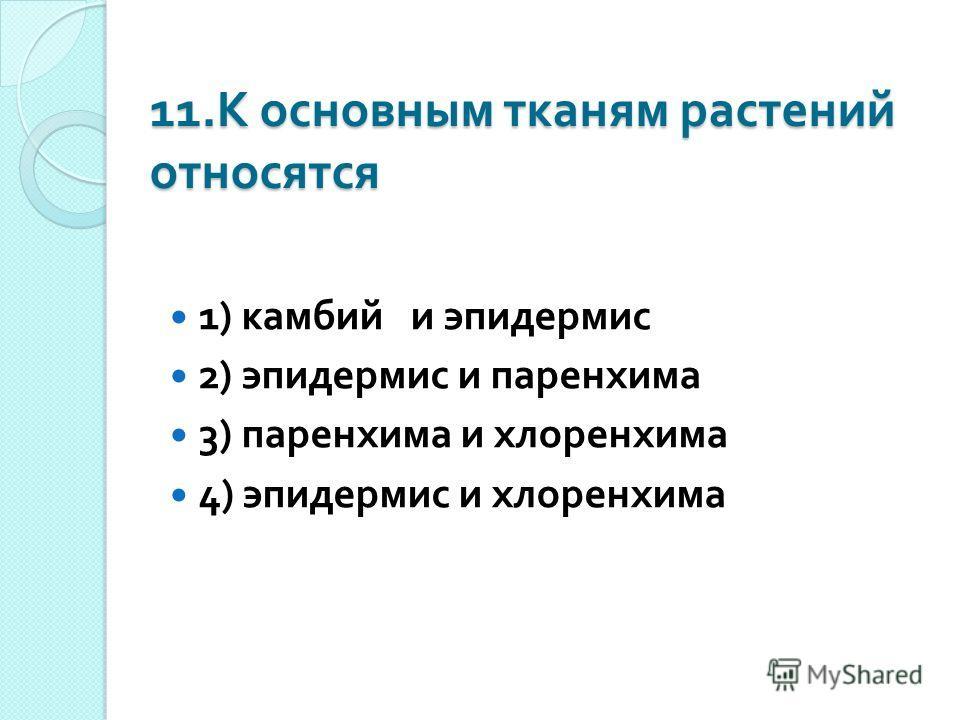 11. К основным тканям растений относятся 1) камбий и эпидермис 2) эпидермис и паренхима 3) паренхима и хлоренхима 4) эпидермис и хлоренхима