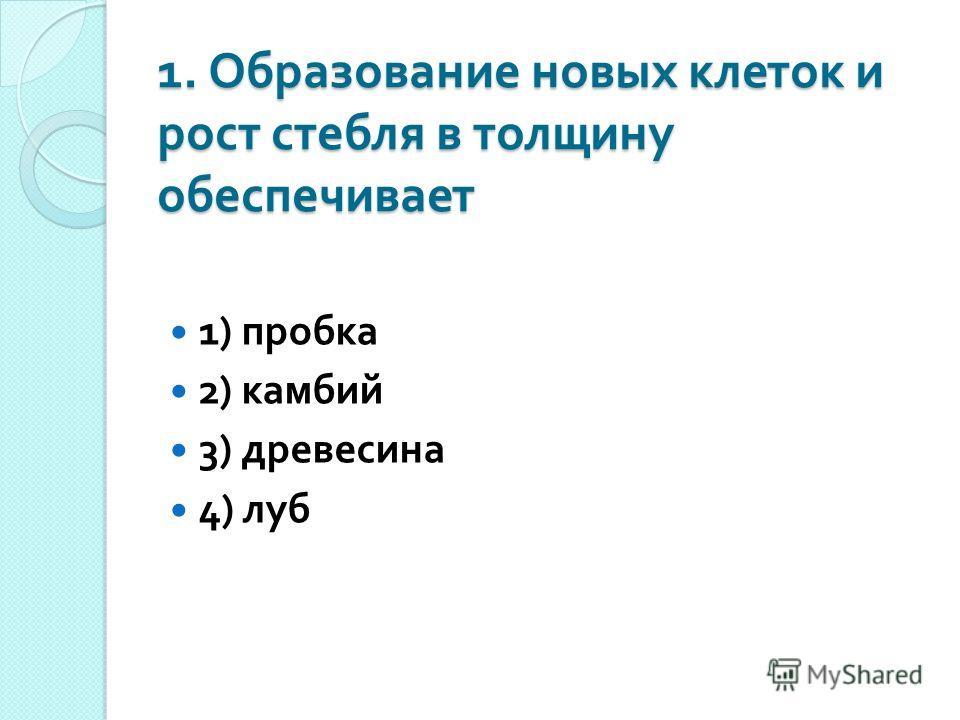 1. Образование новых клеток и рост стебля в толщину обеспечивает 1) пробка 2) камбий 3) древесина 4) луб