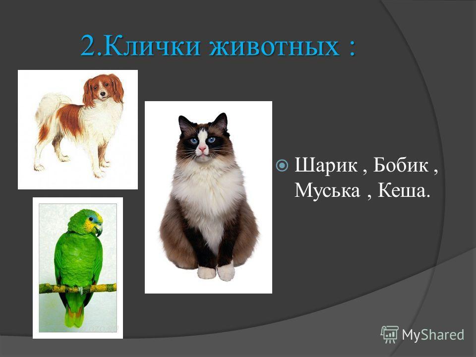 2.Клички животных : Шарик, Бобик, Муська, Кеша.