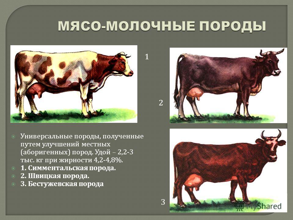 Универсальные породы, полученные путем улучшений местных ( аборигенных ) пород. Удой – 2,2-3 тыс. кг при жирности 4,2-4,8%. 1. Симментальская порода. 2. Швицкая порода. 3. Бестужевская порода 1 2 3