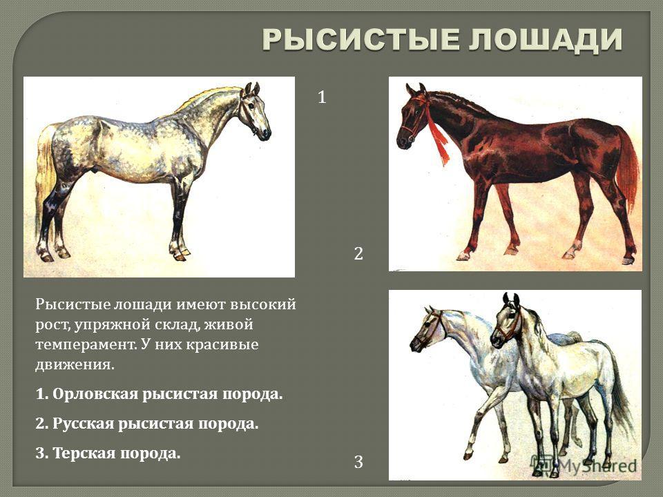 1 2 3 Рысистые лошади имеют высокий рост, упряжной склад, живой темперамент. У них красивые движения. 1. Орловская рысистая порода. 2. Русская рысистая порода. 3. Терская порода.