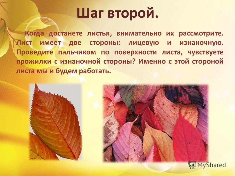 Шаг второй. Когда достанете листья, внимательно их рассмотрите. Лист имеет две стороны: лицевую и изнаночную. Проведите пальчиком по поверхности листа, чувствуете прожилки с изнаночной стороны? Именно с этой стороной листа мы и будем работать.
