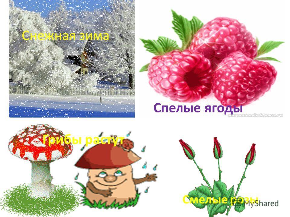 Снежная зима Спелые ягоды Грибы растут Смелые розы