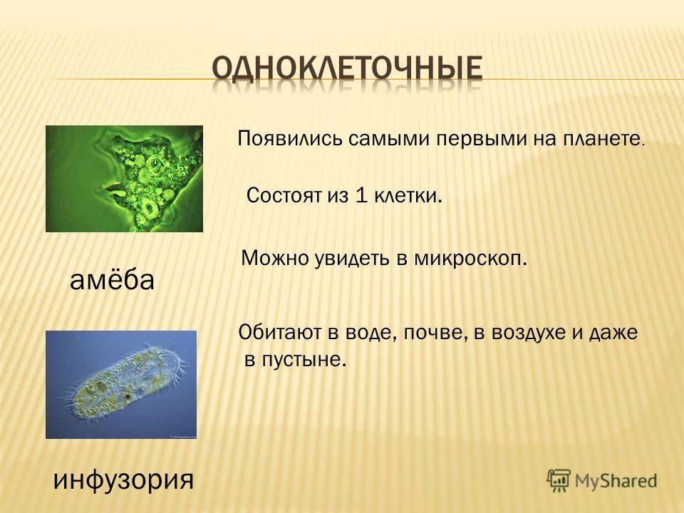 Появились самыми первыми на планете. Состоят из 1 клетки. Можно увидеть в микроскоп. Обитают в воде, почве, в воздухе и даже в пустыне. амёба инфузория