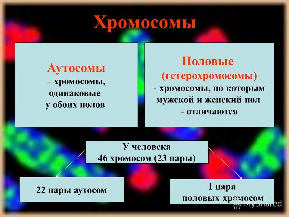 Хромосомы Аутосомы – хромосомы, одинаковые у обоих полов. Половые (гетерохромосомы) - хромосомы, по которым мужской и женский пол - отличаются У человека 46 хромосом (23 пары) 22 пары аутосом 1 пара половых хромосом