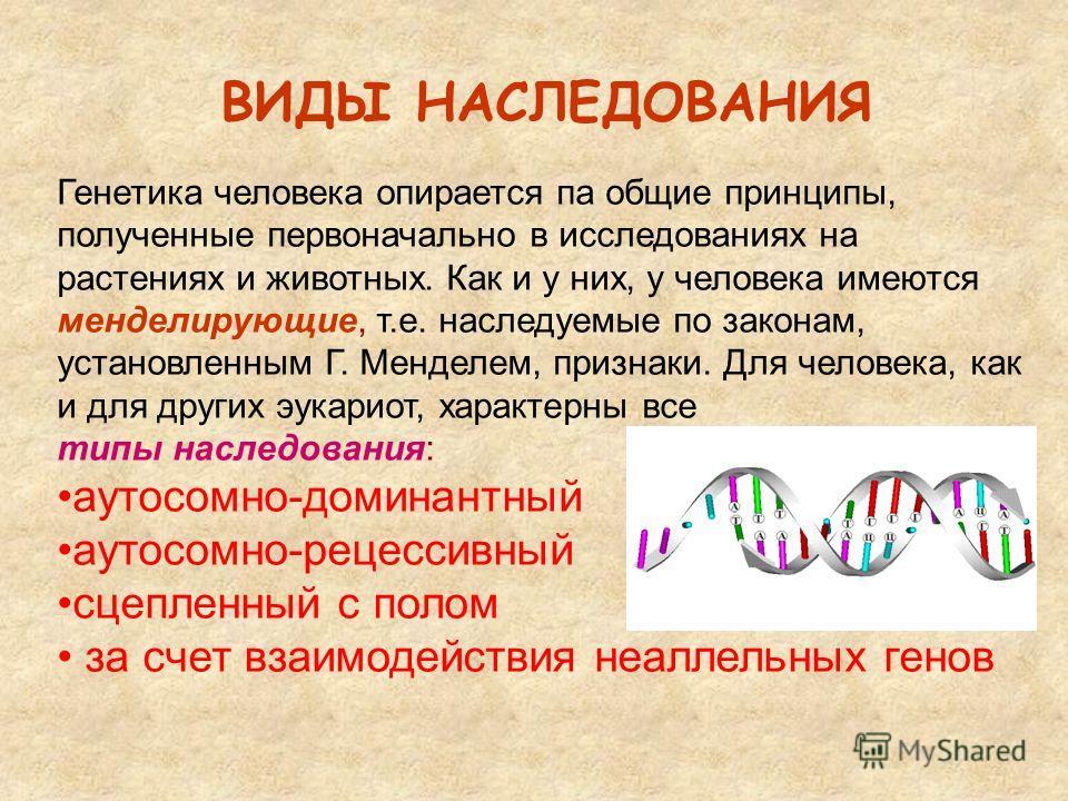 ВИДЫ НАСЛЕДОВАНИЯ Генетика человека опирается па общие принципы, полученные первоначально в исследованиях на растениях и животных. Как и у них, у человека имеются менделирующие, т.е. наследуемые по законам, установленным Г. Менделем, признаки. Для че