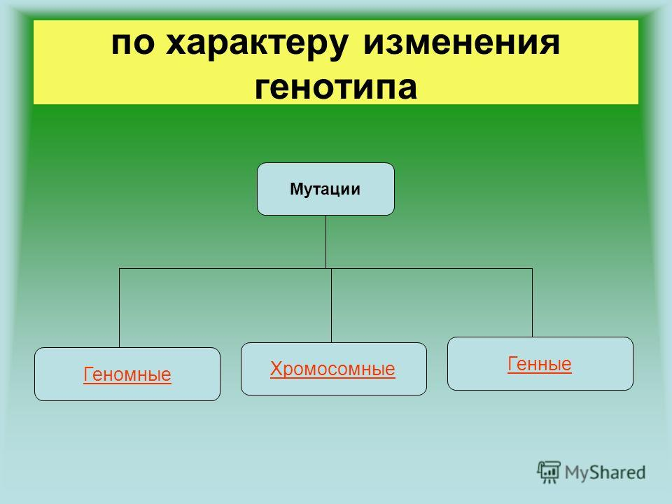 по характеру изменения генотипа Мутации Геномные Генные Хромосомные