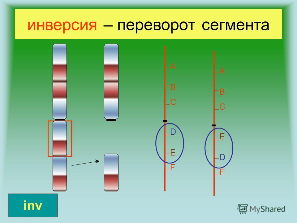 инверсия – переворот сегмента ABCDEFABCDEF ABCEDFABCEDF inv