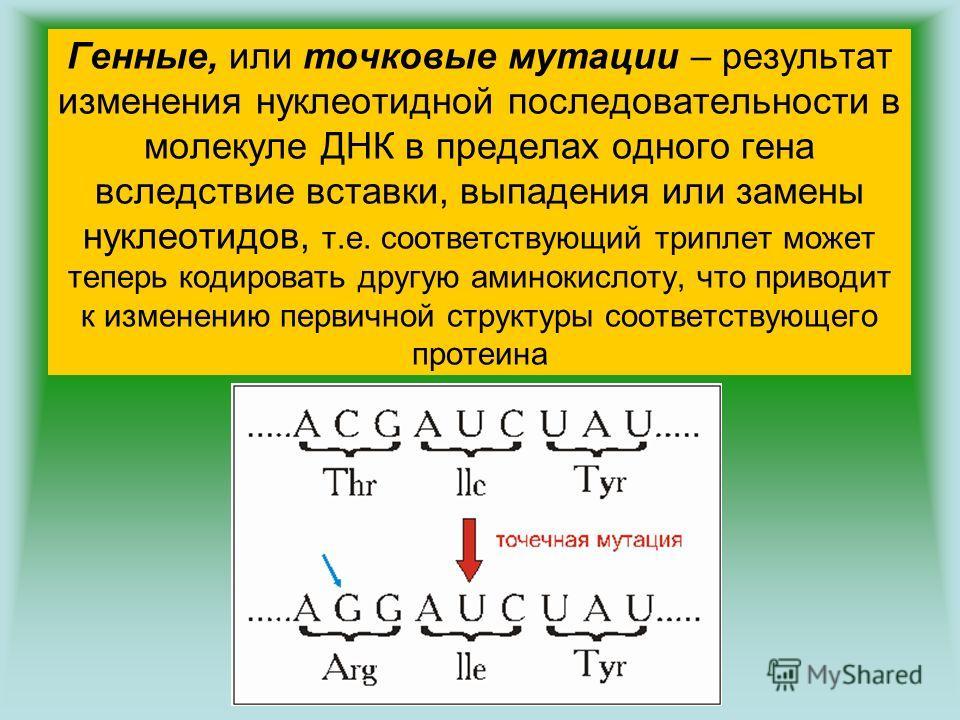 Генные, или точковые мутации – результат изменения нуклеотидной последовательности в молекуле ДНК в пределах одного гена вследствие вставки, выпадения или замены нуклеотидов, т.е. соответствующий триплет может теперь кодировать другую аминокислоту, ч