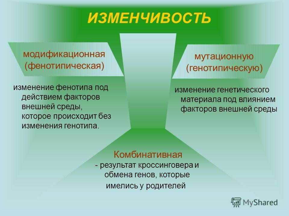 ИЗМЕНЧИВОСТЬ модификационная (фенотипическая) мутационную (генотипическую) изменение фенотипа под действием факторов внешней среды, которое происходит без изменения генотипа. изменение генетического материала под влиянием факторов внешней среды Комби