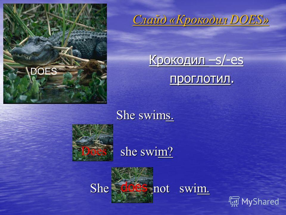 Слайд «Крокодил DOES» Крокодил –s/-es Крокодил –s/-es проглотил. проглотил. She swims. she swim? she swim? She not swim. She not swim. DOES Does does