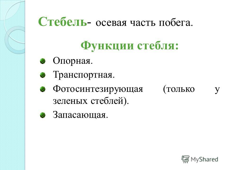 Стебель- осевая часть побега. Функции стебля: Опорная. Транспортная. Фотосинтезирующая (только у зеленых стеблей). Запасающая.