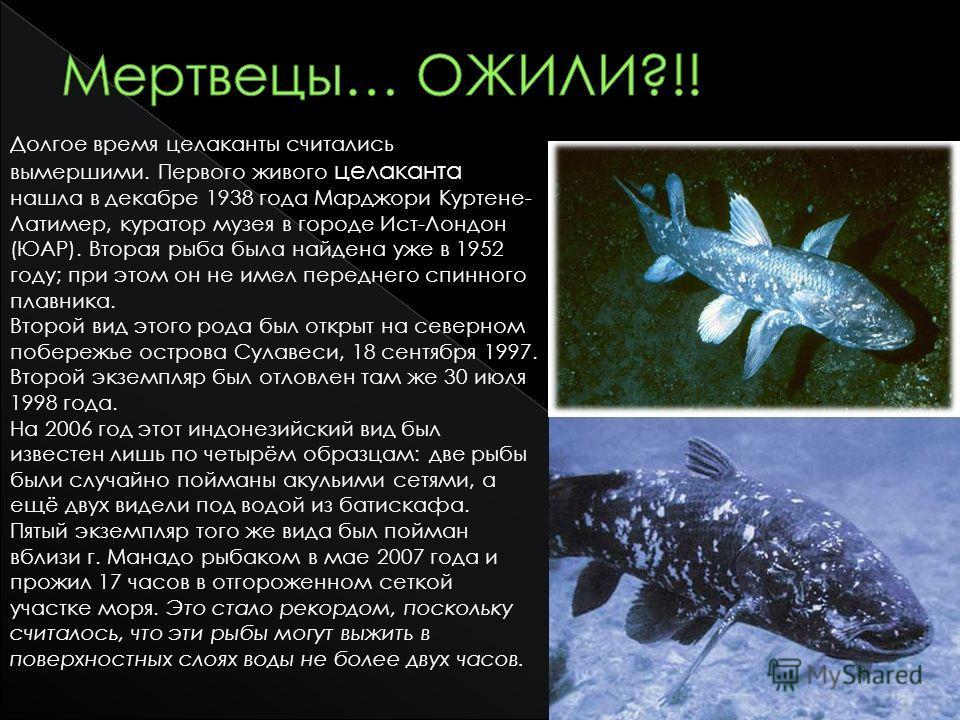 Долгое время целаканты считались вымершими. Первого живого целаканта нашла в декабре 1938 года Марджори Куртене- Латимер, куратор музея в городе Ист-Лондон (ЮАР). Вторая рыба была найдена уже в 1952 году; при этом он не имел переднего спинного плавни