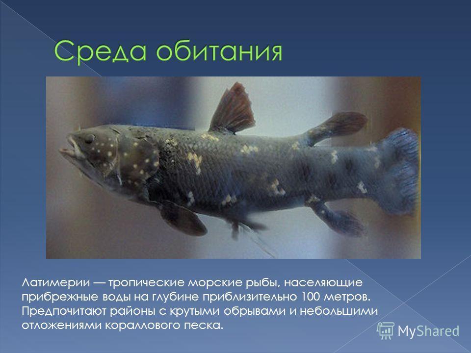 Латимерии тропические морские рыбы, населяющие прибрежные воды на глубине приблизительно 100 метров. Предпочитают районы с крутыми обрывами и небольшими отложениями кораллового песка.