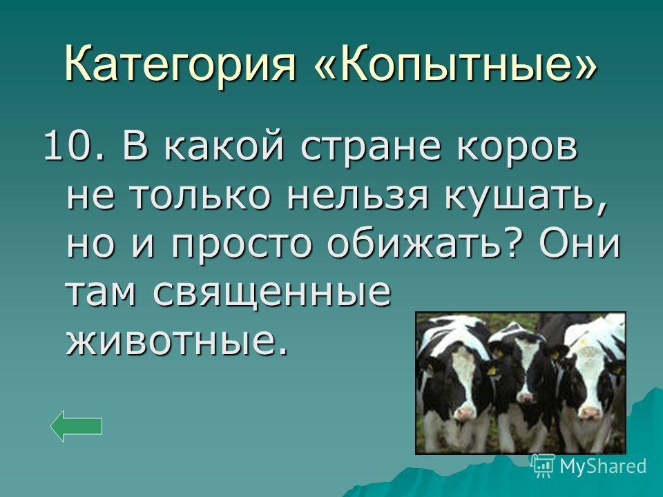 Категория «Копытные» 10. В какой стране коров не только нельзя кушать, но и просто обижать? Они там священные животные.