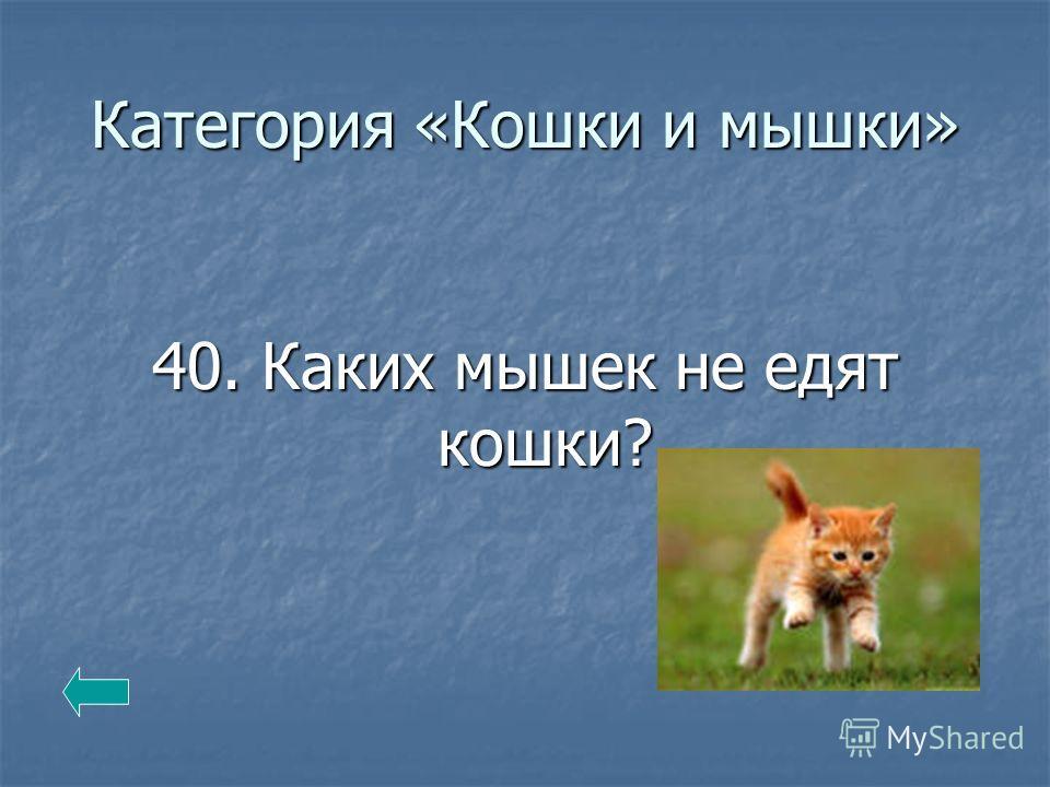 Категория «Кошки и мышки» 40. Каких мышек не едят кошки?