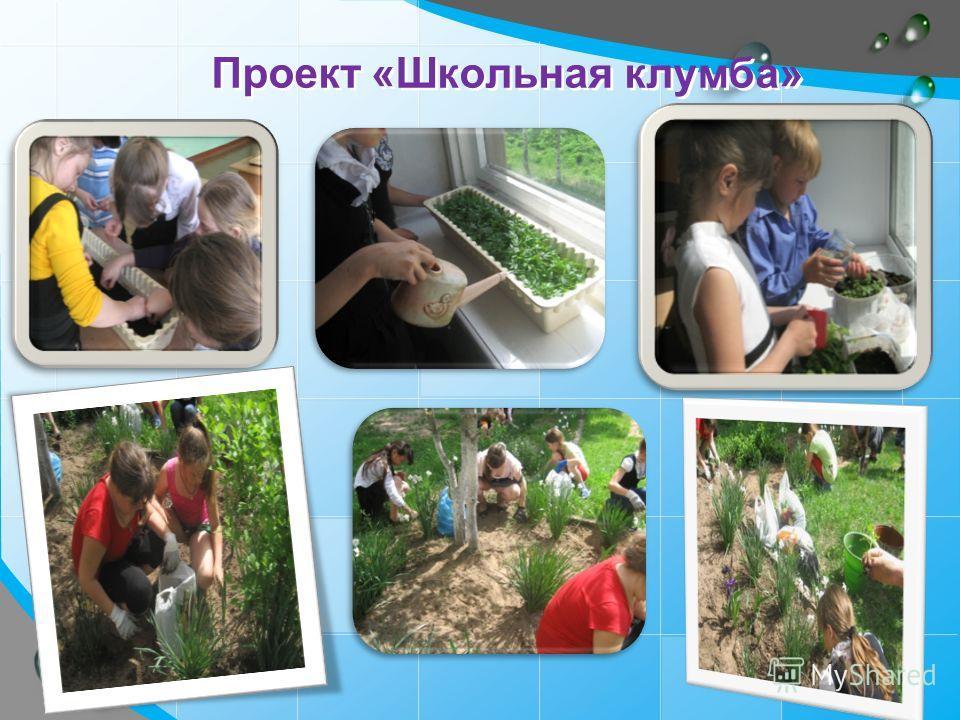 Проект «Школьная клумба»