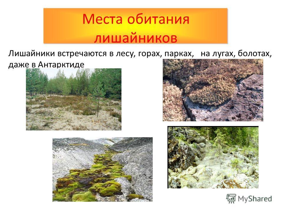 Лишайники встречаются в лесу, горах, парках, на лугах, болотах, даже в Антарктиде Места обитания лишайников