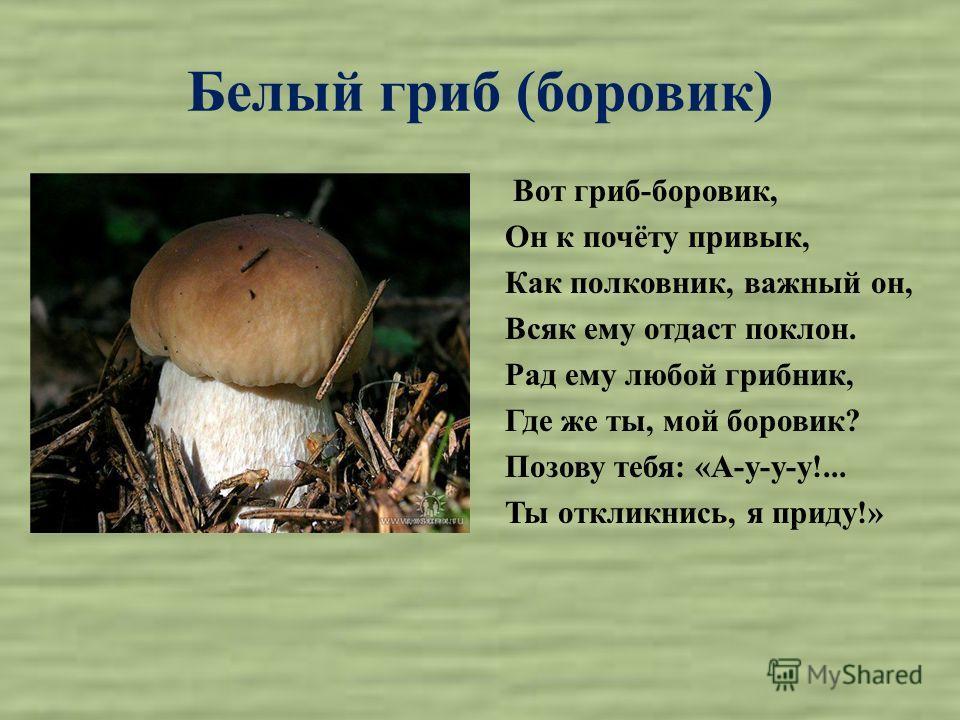 Белый гриб (боровик) Вот гриб-боровик, Он к почёту привык, Как полковник, важный он, Всяк ему отдаст поклон. Рад ему любой грибник, Где же ты, мой боровик? Позову тебя: «А-у-у-у!... Ты откликнись, я приду!»