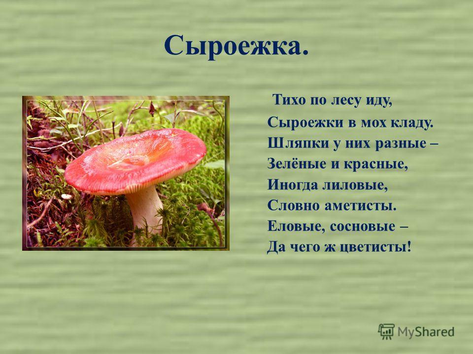 Сыроежка. Тихо по лесу иду, Сыроежки в мох кладу. Шляпки у них разные – Зелёные и красные, Иногда лиловые, Словно аметисты. Еловые, сосновые – Да чего ж цветисты!