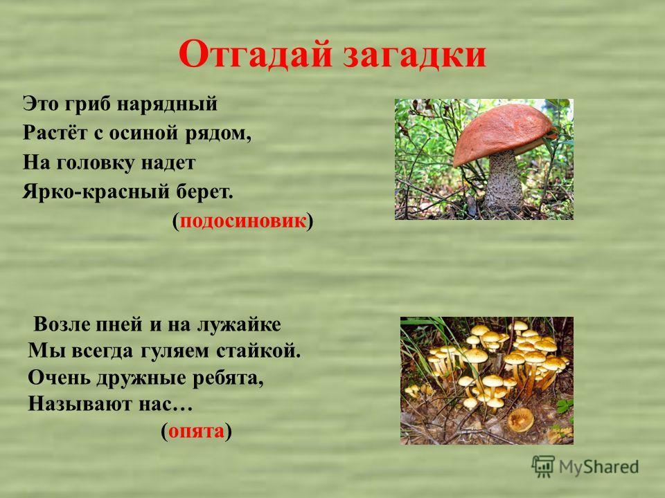 Отгадай загадки Это гриб нарядный Растёт с осиной рядом, На головку надет Ярко-красный берет. (подосиновик) Возле пней и на лужайке Мы всегда гуляем стайкой. Очень дружные ребята, Называют нас… (опята)
