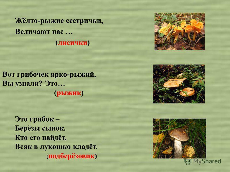 Жёлто-рыжие сестрички, Величают нас … (лисички) Это грибок – Берёзы сынок. Кто его найдёт, Всяк в лукошко кладёт. ( подберёзовик) Вот грибочек ярко-рыжий, Вы узнали? Это… (рыжик)