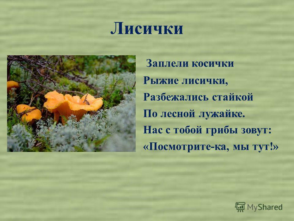 Лисички Заплели косички Рыжие лисички, Разбежались стайкой По лесной лужайке. Нас с тобой грибы зовут: «Посмотрите-ка, мы тут!»