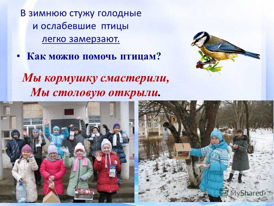 Социальный Проект В Начальной Школе Покормите Птиц Зимой Презентация