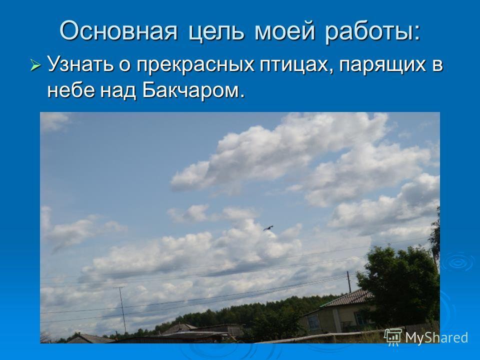 Основная цель моей работы: Узнать о прекрасных птицах, парящих в небе над Бакчаром. Узнать о прекрасных птицах, парящих в небе над Бакчаром.
