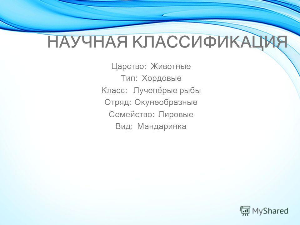 НАУЧНАЯ КЛАССИФИКАЦИЯ Царство: Животные Тип: Хордовые Класс: Лучепёрые рыбы Отряд: Окунеобразные Семейство: Лировые Вид: Мандаринка