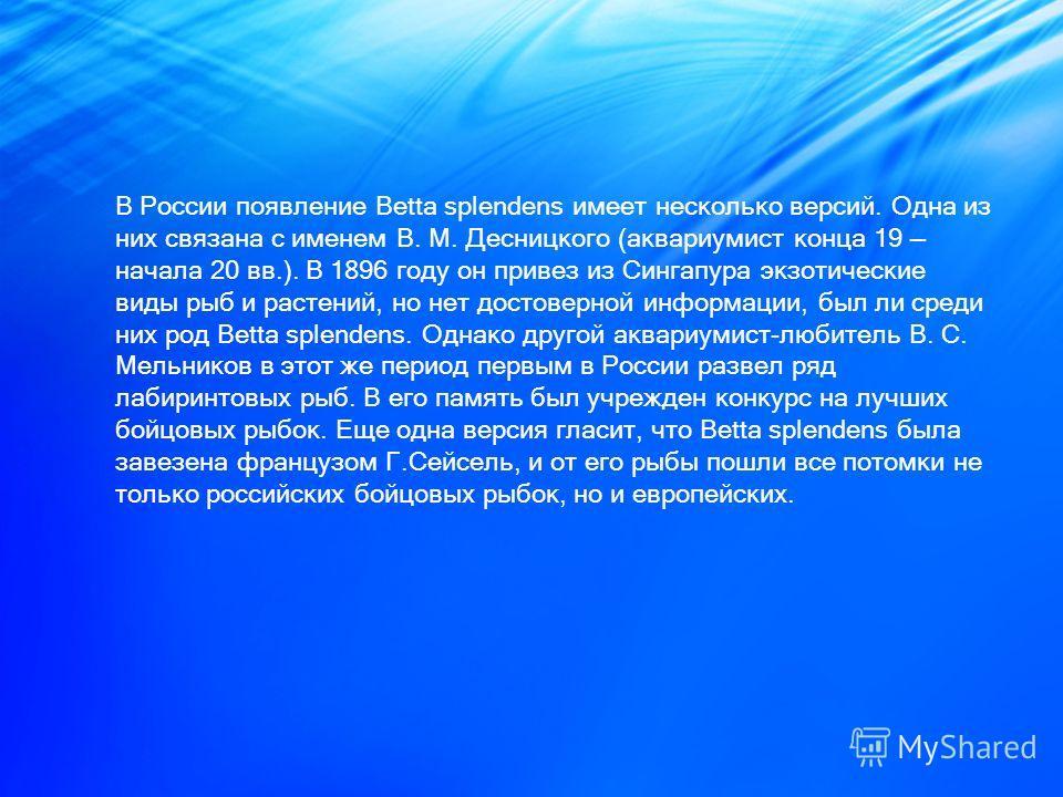 В России появление Betta splendens имеет несколько версий. Одна из них связана с именем В. М. Десницкого (аквариумист конца 19 начала 20 вв.). В 1896 году он привез из Сингапура экзотические виды рыб и растений, но нет достоверной информации, был ли