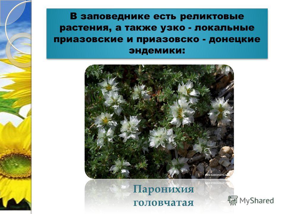 В заповеднике есть реликтовые растения, а также узко - локальные приазовские и приазовско - донецкие эндемики: Паронихия головчатая
