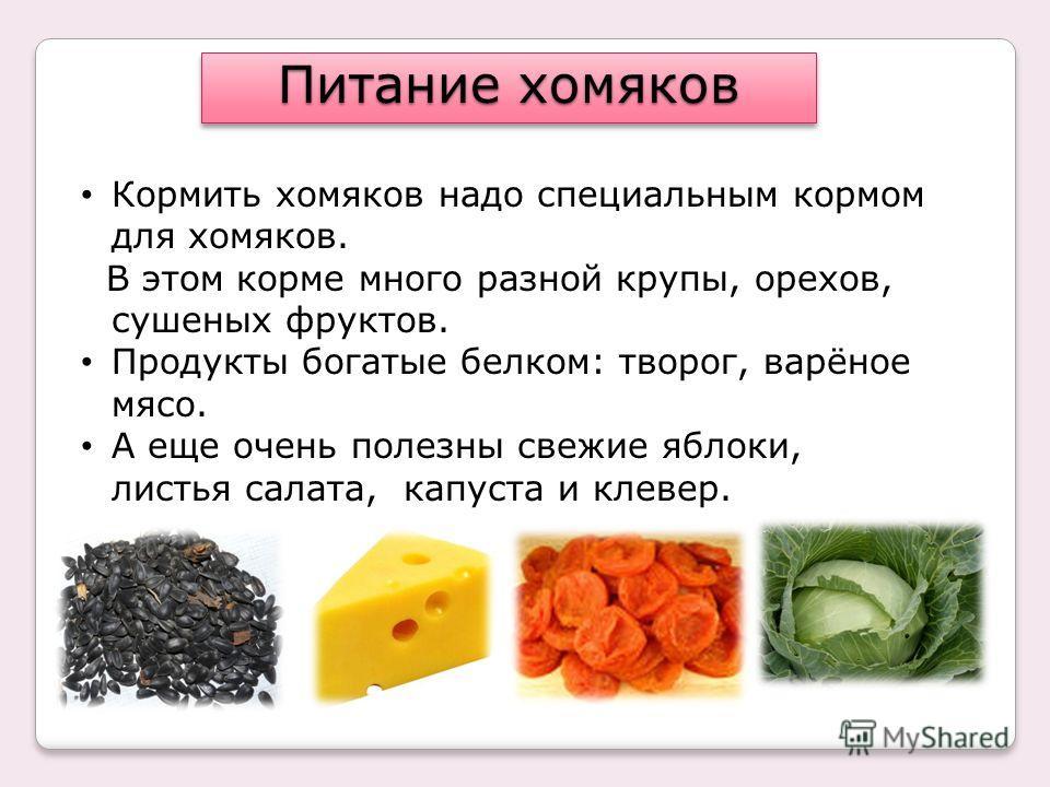продукты богатые белком список для похудения