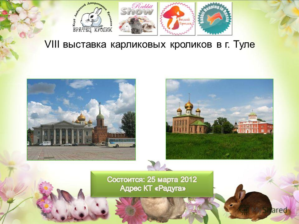 VIII выставка карликовых кроликов в г. Туле