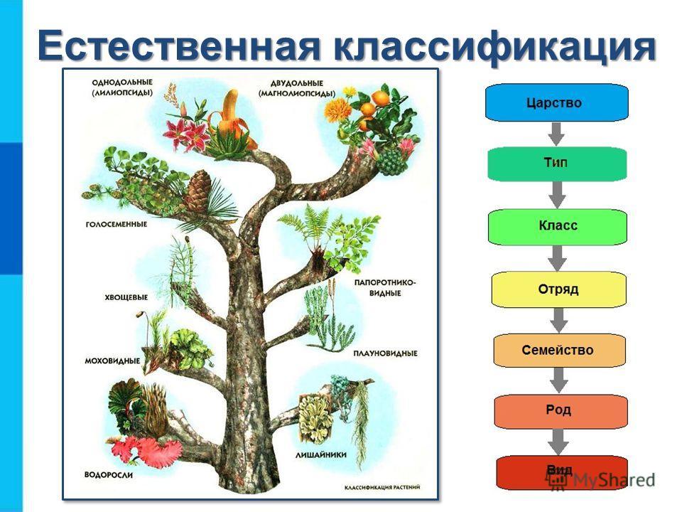 Естественная классификация