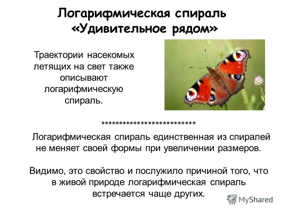 Логарифмическая спираль «Удивительное рядом» Траектории насекомых летящих на свет также описывают логарифмическую спираль. ************************** Логарифмическая спираль единственная из спиралей не меняет своей формы при увеличении размеров. Види
