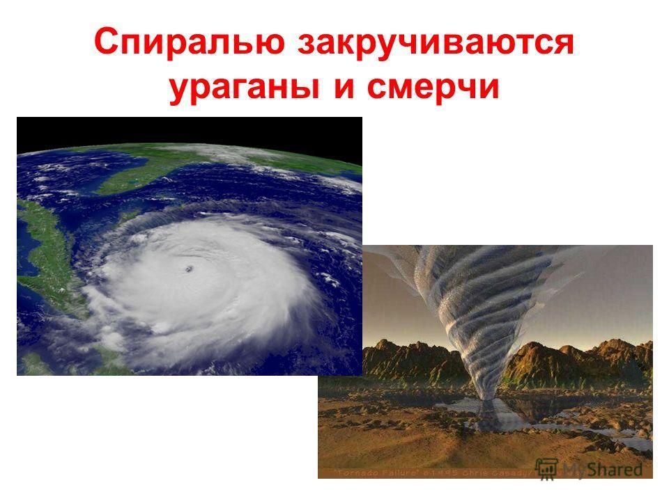 Спиралью закручиваются ураганы и смерчи