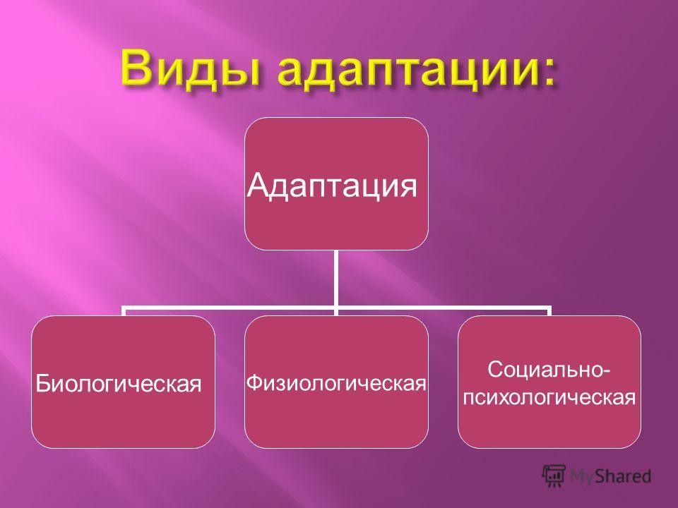 Адаптация БиологическаяФизиологическая Социально- психологическая