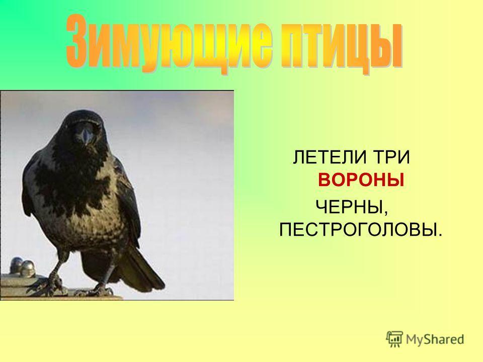 ЛЕТЕЛИ ТРИ ВОРОНЫ ЧЕРНЫ, ПЕСТРОГОЛОВЫ.
