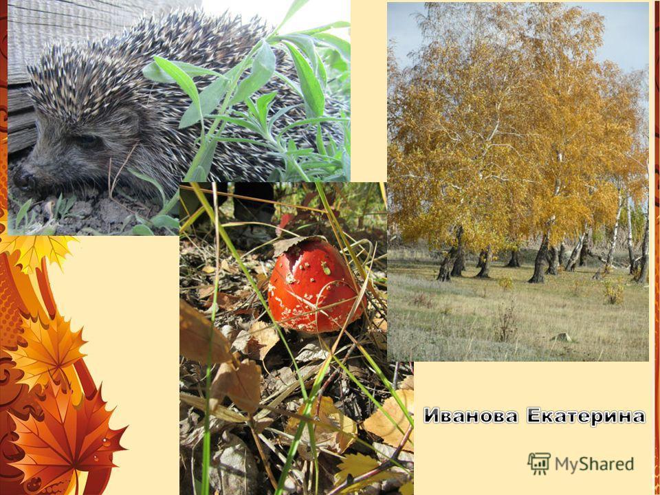 Осенью лес необычайно красив. Мы едем в лес, чтобы полюбоваться осенними красками. Я собираю букет из опавших листьев и дарю маме. Мы медленно шагаем по лесу и осматриваемся. Как чудесно в осеннем лесу! Прохорова Настя Незаметно наступила осень. Лист