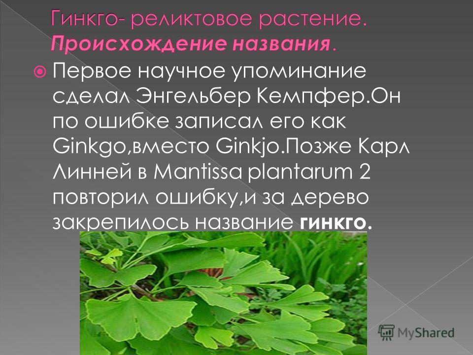 Первое научное упоминание сделал Энгельбер Кемпфер.Он по ошибке записал его как Ginkgo,вместо Ginkjo.Позже Карл Линней в Mantissa plantarum 2 повторил ошибку,и за дерево закрепилось название гинкго.