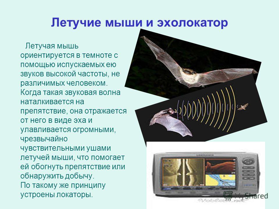 Летучие мыши и эхолокатор Летучая мышь ориентируется в темноте с помощью испускаемых ею звуков высокой частоты, не различимых человеком. Когда такая звуковая волна наталкивается на препятствие, она отражается от него в виде эха и улавливается огромны