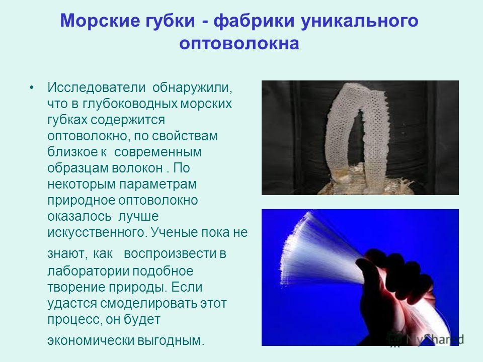 Морские губки - фабрики уникального оптоволокна Исследователи обнаружили, что в глубоководных морских губках содержится оптоволокно, по свойствам близкое к современным образцам волокон. По некоторым параметрам природное оптоволокно оказалось лучше ис
