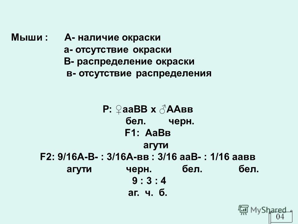 0404 Мыши : А- наличие окраски а- отсутствие окраски В- распределение окраски в- отсутствие распределения Р: ааВВ х ААвв бел. черн. F1: АаВв агути F2: 9/16А-В- : 3/16А-вв : 3/16 ааВ- : 1/16 аавв агути черн. бел. бел. 9 : 3 : 4 аг. ч. б.