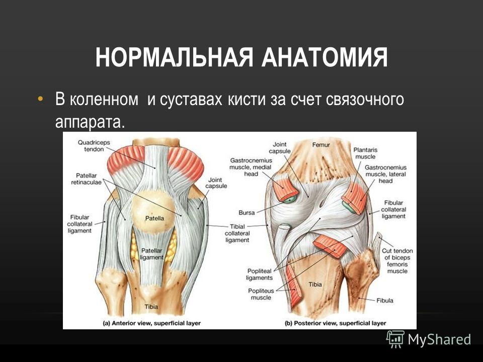 Anatomy behind knee